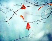 leaves in blue and red - autumn photography - minimalist image - zen photo - decorative print