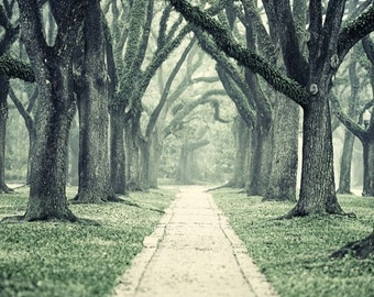 Foggy tree lined path, Moss covered oaks, Tranquil Landscape, Muted green tones, Texas