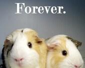 GUINEA PIG Best Friends Magnet Set - 4PC Emerson Quote, Guinea Pigs Rock & More