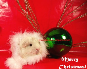"""Mod Red GUINEA PIG CHRISTMAS Print - Limited Edition 8x10"""" Glossy Photograph"""