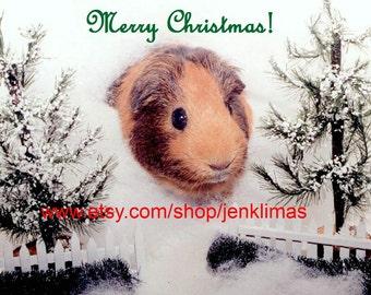 "GUINEA PIG Christmas Winter Wonderland Photograph - Limited Edition 8x10"" Glossy Print"
