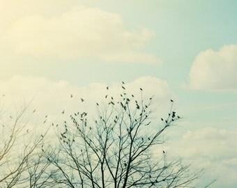 Fine Art Print, Bird Silhouette, Winter Trees, Teal, Fly, Bird Photo, Nature Art, Cloud Photo, Sky, Wall Art, Branches, Woodland Art