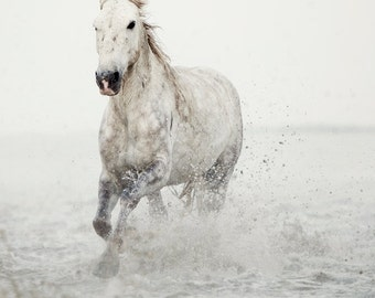 Horse Photography, White horse running in water, Nature Photography, Large Wall Art Print, Fine Art Photography - Wild at Heart