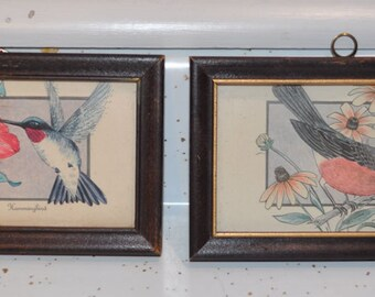 2 framed bird prints hummingbird and robin