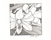 First Bloom- Framed Orchid Miniature Pen and Ink Drawing by Jennifer Greenfield