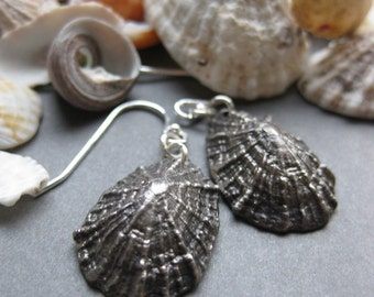 Seashell Saint Barthelemy LIMPET sterling silver earrings