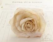 Single Stem 4th Anniversary Linen Rose Gold Flower Gift for Wife Everlasting Flower Arrangement- Made to Order