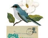 Bird No.30