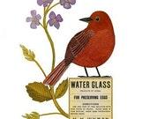 Bird No.12