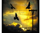 telephone wires, birds, sky, silhouette, Metallic Archival Photograph -  Lemon Yellow Sky