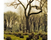 Earth Tones, graveyard tree photograph, Archival earthy photograph - Time Passages