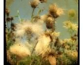 wildflowers, prickly city weeds, softly lit, fields, weeds, flora - Urban flowers