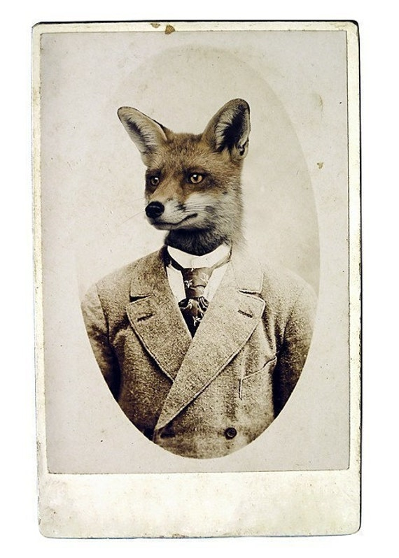 Fox Print, Young Mr. Fox,  8x12 Inch Print