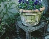 Pansies in the Courtyard Charleston Garden Fine Art Photograph