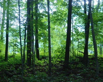 Green Forest Print in Vermont Trees Leaves Shade Photograph