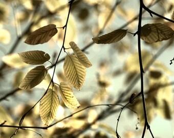 tree photography, gold livingroom decor, leaves photo, livingroom wall art, gold decor, 8x10