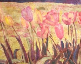 Spring Tulip Garden TRansfer Photograph Print