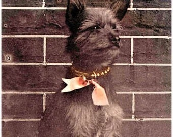 Scruffy Old World Dog Ginger sits Atop Tree Stump Tinted Vintage Photo Print