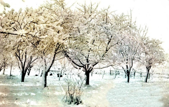 "special order for Stephanie 10""X8"" Snow FAlls on Orchard Trees Fine ARt vintage photography"