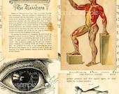 Antique Medical Book Digital PDF with 60 digital sheets bones and nerves and corset waist