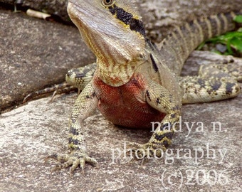 A Little Dragon - signed photo print, 8x10 inches (20x25cm)