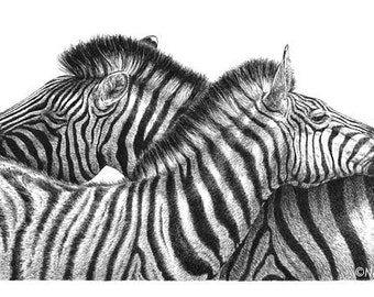 Zebra Love - Print of Pen and Ink Drawing - 16x8 inches (40x20cm) - African wildlife safari animal art, zebra decor