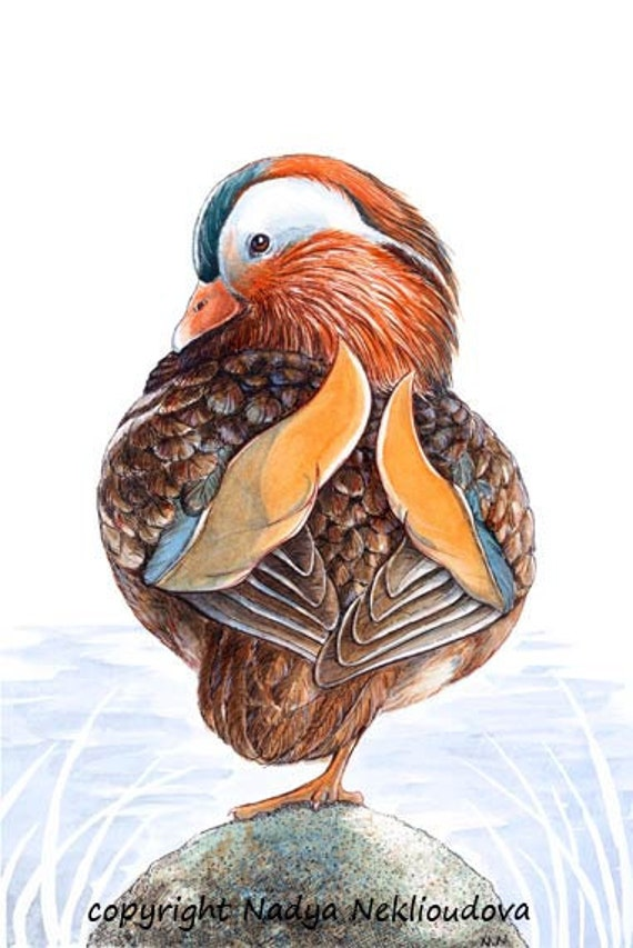 Mandarin Duck - Wildlife Art Print - signed Fine Art Giclee Reproduction of original Watercolour and Ink Painting - 5x7 OR 8x12inches