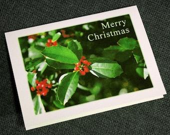 Holly Christmas Cards