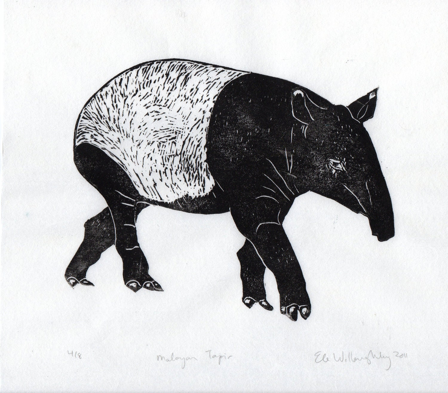 The gallery for tapir drawing for Tapir coloring page