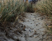 Beach Photography of Dune Landscape - Archival Print - Through the Dunes