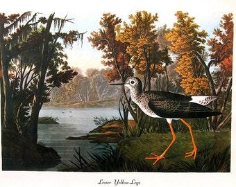Audubon Bird Print - Lesser Yellow Legs 1979 Vintage Audubon Bird Print Book Plate
