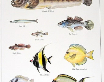 Atlantic Wolffish, Sand Eel, Dwarf Goby, etc. 1984 Vintage Fish Book Plate Print