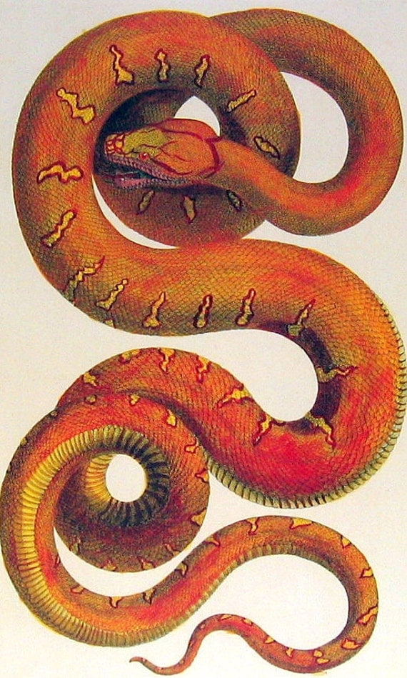 Cabinet Of Natural Curiosities Snake
