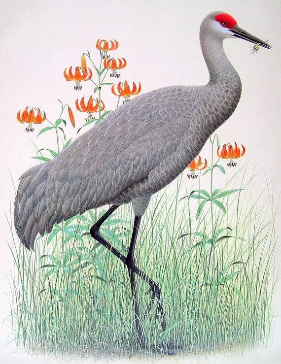 1989 Vintage Bird Illustration Sandhill Crane  1989 Vintage Bi...