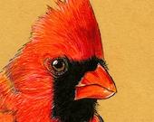 Art Print Cardinal Bird giclee print 8 x 10, does NOT come framed