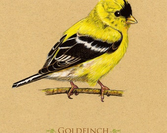 Goldfinch bird giclee art print 8 x 10 for easy framing, does NOT come framed