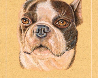 Boston Terrier Birthday Card 5 x 7      front of card can be left blank or personalized