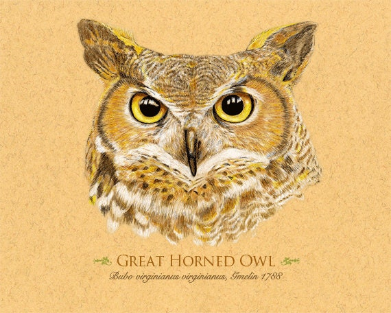Giclee Art Print of a drawing of a Great Horned Owl 8 x 10 inches   Can be Personalized