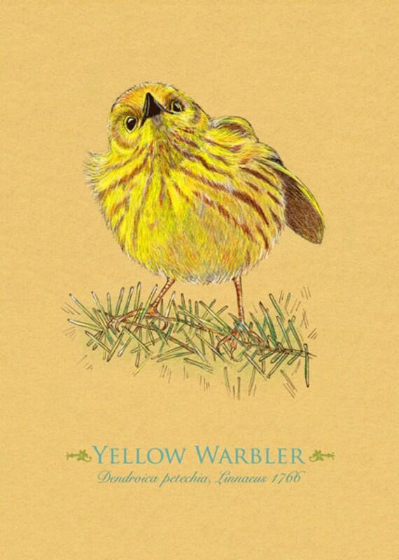 Yellow Warbler Bird Greeting Card 5 x 7 Birds