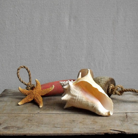 Vintage Conch Sea Shell