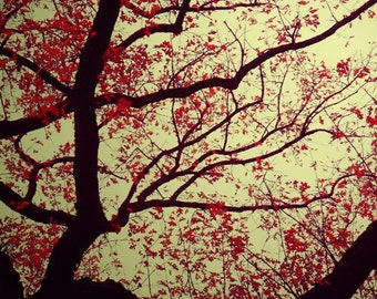 Tree Photograph, Gold, Red, Black, Dark Art, Bare Branches, Nature Photography, Autumn Leaves, Dramatic Home Decor, Bold Color