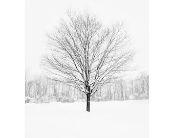 Tree Wall Art - Tree in Winter