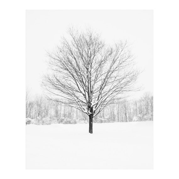 Winter Tree Prints - Tree Wall Art - Black and White Art Prints - Winter Landscape Photography - Large Wall Art - Single Tree - Cabin Decor