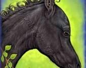 Horse ACEO Black Arabian Foal Quality Art Print