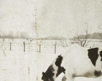 Simple Life; horse photo art, cabin art, rural art, rustic art, fine art photograpy, farm art, she shed art, by F2images