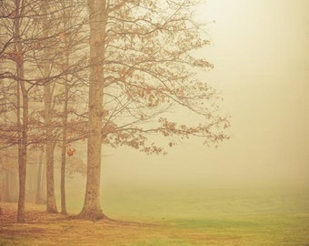 Autumn Decor - Tree Photograph - Fog - Nature Photography - Ohio - Dreamy Art - wall art collection - art grouping - Living Room Wall Art