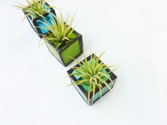 Air plant holder - Three stained glass cubes - Blue Green with Tillandsia Air Plant