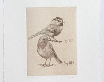 Chickadee and Robin Bird Art Print - Original Etching - Bird art print - Chickadee Robin