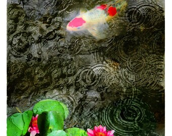Dark rain, 11x17 inches, Original Signed, Fine Art photograph, Lotus, pond, Artist gardens, Koi, rain drops, Home decor, Wall art