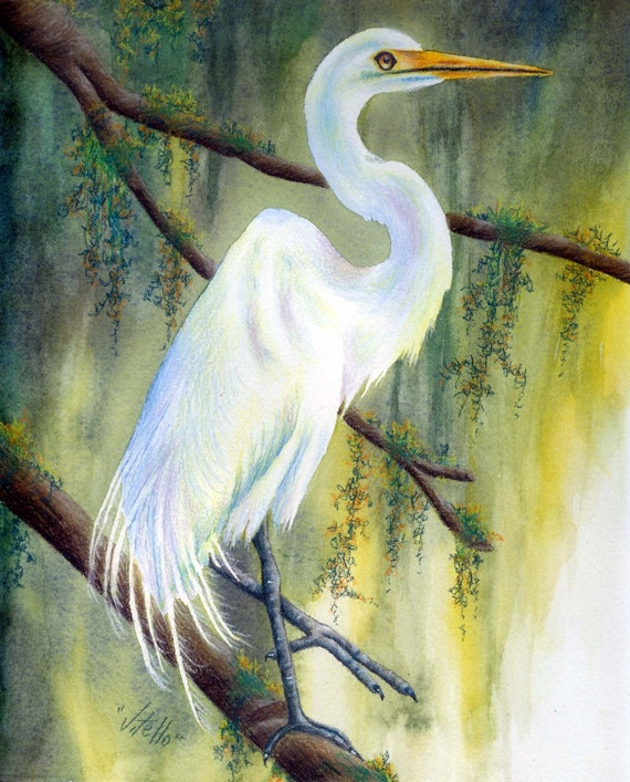 Bayou Egret-Colored Pencil Pattern